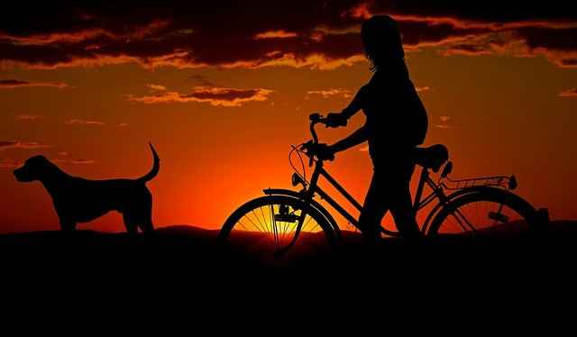 Ein besserer weil kühlerer Zeitpunkt zum Radeln mit Hund: Der Abend